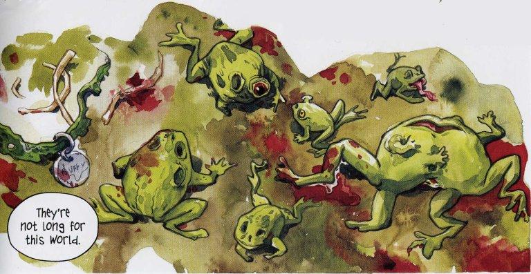 bob frogs